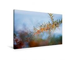 Calvendo Premium Textil-Leinwand 90 cm x 60 cm quer, Sanddorn   Wandbild, Bild auf Keilrahmen, Fertigbild auf echter Leinwand, Leinwanddruck Natur Natur