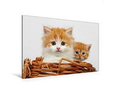 Premium Textil-Leinwand 120 x 80 cm Quer-Format Zwei junge Katzen im Korb | Wandbild, HD-Bild auf Keilrahmen, Fertigbild auf hochwertigem Vlies, Leinwanddruck von Klaus Eppele