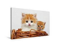 Premium Textil-Leinwand 90 x 60 cm Quer-Format Zwei junge Katzen im Korb | Wandbild, HD-Bild auf Keilrahmen, Fertigbild auf hochwertigem Vlies, Leinwanddruck von Klaus Eppele