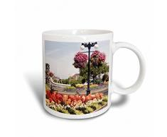 3dRose Blumenampel Blumenkasten, Victoria, bc-cn02 sws0024-stuart Westmorland Tasse, Keramik, Mehrfarbig, 11,43 x 8,45 x 12,7 cm