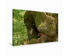 Premium Textil-Leinwand 90 x 60 cm Quer-Format Kuschel-Tier | Wandbild, HD-Bild auf Keilrahmen, Fertigbild auf hochwertigem Vlies, Leinwanddruck von Angelika Keller