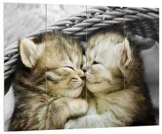 Pixxprint Zwei süße Babykatzen im Korb schwarz/weiß, MDF Bretterlook Format: 80x60cm, Wanddekoration Holzbild, Holz, bunt, 80 x 60 x 2 cm