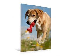 Calvendo Premium Textil-Leinwand 60 cm x 90 cm hoch, Lustiges Spielzeug | Wandbild, Bild auf Keilrahmen, Fertigbild auf echter Leinwand, Leinwanddruck: Windhund-Mischling Tiere Tiere