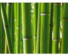 AG Design FTS 0170 Bambus, Papier Fototapete - 360x254 cm - 4 teile, Papier, multicolor, 0,1 x 360 x 254 cm