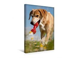 Calvendo Premium Textil-Leinwand 30 cm x 45 cm hoch, Lustiges Spielzeug | Wandbild, Bild auf Keilrahmen, Fertigbild auf echter Leinwand, Leinwanddruck: Windhund-Mischling Tiere Tiere