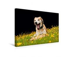 Calvendo Premium Textil-Leinwand 45 cm x 30 cm quer, EIN lustiges Spielzeug | Wandbild, Bild auf Keilrahmen, Fertigbild auf echter Leinwand, Leinwanddruck: Azawakh-Ridgeback Hund Tiere Tiere