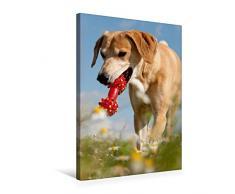 Calvendo Premium Textil-Leinwand 50 cm x 75 cm hoch, Lustiges Spielzeug | Wandbild, Bild auf Keilrahmen, Fertigbild auf echter Leinwand, Leinwanddruck: Windhund-Mischling Tiere Tiere