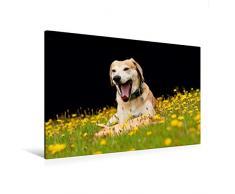 Calvendo Premium Textil-Leinwand 120 cm x 80 cm Quer, Ein lustiges Spielzeug | Wandbild, Bild auf Keilrahmen, Fertigbild auf Echter Leinwand, Leinwanddruck: Azawakh-Ridgeback Hund Tiere Tiere
