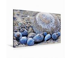Leinwand Muscheln im Sand 90x60cm, Special-Edition Wandbild, Bild auf Keilrahmen, Fertigbild auf hochwertigem Textil, Leinwanddruck, kein Poster
