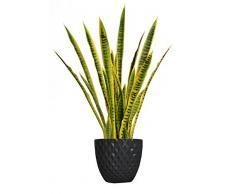 Laura Ashley vhx121205 Schlange Pflanze Übertopf, 104,1 cm
