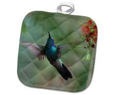 3dRose phl_258572_1 Topflappen, Kolibri Thalassinus, Costa Rica, 20 x 20 cm, Grün
