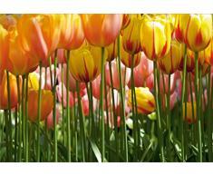 AG Design FTS 0045 Tulpen, Papier Fototapete - 360x254 cm - 4 teile, Papier, multicolor, 0,1 x 360 x 254 cm