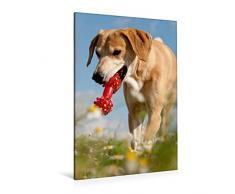 Calvendo Premium Textil-Leinwand 80 cm x 120 cm hoch, Lustiges Spielzeug | Wandbild, Bild auf Keilrahmen, Fertigbild auf echter Leinwand, Leinwanddruck: Windhund-Mischling Tiere Tiere