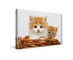 Premium Textil-Leinwand 45 x 30 cm Quer-Format Zwei junge Katzen im Korb | Wandbild, HD-Bild auf Keilrahmen, Fertigbild auf hochwertigem Vlies, Leinwanddruck von Klaus Eppele