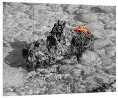Pixxprint HBVs_4967_80x60 prächtige Krabbe am Wasser MDF-Holzbild im Bretterlook Wanddekoration, bunt, 80 x 60 x 2 cm