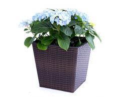 Blumenkübel Pflanzkübel Blumentopf Quadrat konisch Polyrattan LxBxH 42x42x38cm coffee braun