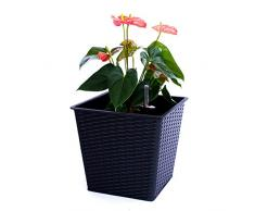 Blumenkübel Pflanzkübel Blumentopf Quadrat konisch Polyrattan LxBxH 42x42x38cm schwarz.