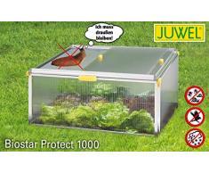 Juwel BIOSTAR Frühbeet Bio Star Protect 1000 (reiche Ernten, ideales Mikrokilma, geschützt, Maße: 100 x 75 x 50 cm), transparent