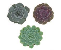 Pasiora Echeveria Mix im 6cm Topf, verschiedene kleine Pflanzen, Rosetten Geschenkset (3 Stück)
