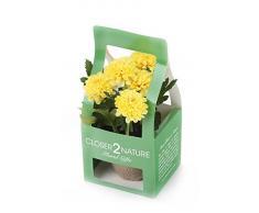 Closer 2 Nature Artificial Flower, Künstliche Mini Garten Chrysantheme in Geschenk Box, 18 cm, gelb
