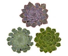 Pasiora Echeveria Mix im 10,5cm Topf, verschiedene mittelgroße Pflanzen, Rosetten Geschenkset (3 Stück)