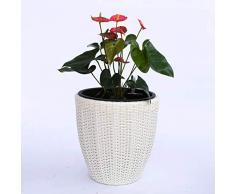Pflanzkübel Blumenkübel Blumentopf rund konisch Polyrattan D46xH46cm creme weiß.