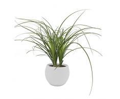 Dominik Blumen und Pflanzen, Elefantenfuß 3x klein im Topf Cresto Weiß Zimmerpflanze, Grün, 40 x 20 x 20 cm