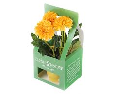 Closer 2 Nature Artificial Flower, Künstliche Mini Garten Chrysantheme in Geschenk Box, 19 cm, gelb/gold