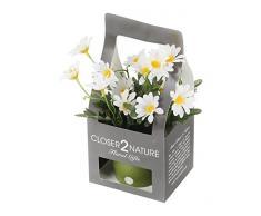 Closer 2 Nature Artificial Flower, Künstliche Mini Garten Strauchmargerite in Geschenk Box, 18 cm, weiß