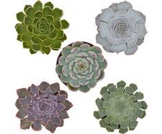 Pasiora Echeveria Mix im 10,5cm Topf, verschiedene mittelgroße Pflanzen, Rosetten Geschenkset (5 Stück)