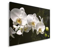 Feeby Frames, Leinwandbild, Bilder, Wand Bild, Wandbilder, Kunstdruck 70x100cm, ORCHIDEEN, BLUMEN, MAKRO, WEIß, SCHWARZ
