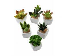 Kunstpflanzen Sukkulenten (6-tlg. Set) in grün von bonprix